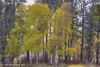 Turnbull (jimgspokane) Tags: fall autumn turnbullwildliferefuge washingtonstate trees otw