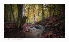 Waldluft / forest air (H. Roebke (offline for a while)) Tags: canon1635mmf28lisiii de canon5dmkiv graufilter herbst nature germany rural wald natur 2017 baum tree forest nd1000 fall landscape lightroom landschaft longtimeexposure
