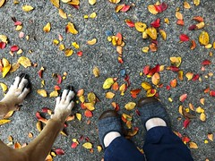 311/365 (moke076) Tags: 2017 365 project 365project project365 oneaday photoaday vsco vscocam iphone cell cellphone mobile self selfie me portrait shoes keen dog great dane moose feet fall autumn leaves lookingdown fromwhereistand sidewalk walk atlanta ga south southern