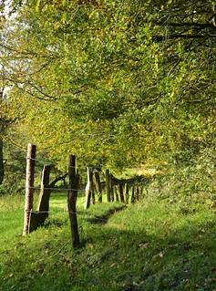 Herbstspaziergang - Weg auf dem Aschberg, Naturpark Hüttener Berge (7)