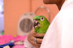 (John Donges) Tags: parrot pet bird mealyamazon injured veterinary hospital patient veterinarians care exotics leg prosthetic 3dprinting 1729