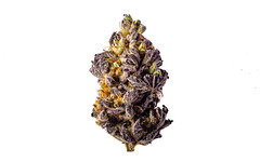 Purple Dolato (ShaneRounce.com Design and Photography) Tags: cannabis chronic green herb marijuana medicine natural nature plant weed