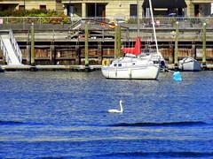 Portrait with Background (dimaruss34) Tags: newyork brooklyn dmitriyfomenko image sheepsheadbay yacht yachts swan building buildings