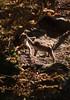 20171020-_PHE1844 (drix82) Tags: g2 150600 wildlife tamon nikon d500 eurasian wild cats luchs lynx grass animal wood