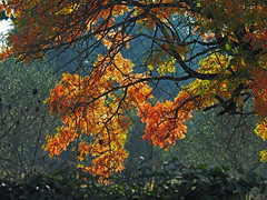 Intrecci d'autunno - Autumn twines (Ola55) Tags: ola55 italy umbria collina hill autunno autumn foglie leaves yellow giallo rami branches italians luce light aplusphoto
