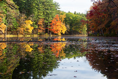 Reflections (lilredlizzie) Tags: autumn fall foliage leaves water reflection pretty beautiful beauty nature naturelovers artgrowninnature amazing landscape massachusetts newengland canon canon6d canon2470l woods outdoors outside travel trees color colors