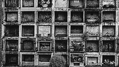 Nicho (Oxkar G) Tags: sony a37 exterior city ciudad lente manual blanco street calle negro noir blanc blackwhite monocromo gente 1855 chile cementerio
