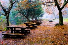 東海自然步道178 (imCherryChen) Tags: 日本 japan 京都 kyoto 高雄 takao たかお 楓 かえで 紅葉 もみじ 東海自然步道 lx5