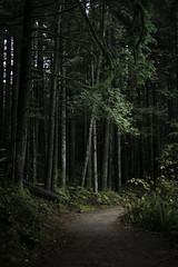 Vancouver - Forest (RomainL_CA) Tags: vancouver bc canada vancity british coloumbia raincouver autumn 2017 forest tree pine leave leaf trail hike north water blue rice lake lynn valley calm moss wood grass