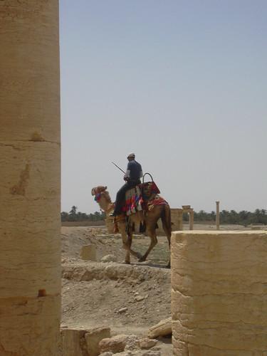 Palmyra (Tadmor), Dromedarreiter neben der Kolonnadenstrasse