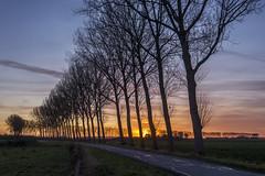 West-Zeeuws-Vlaanderen - The Netherlands (wietsej) Tags: westzeeuwsvlaanderen the netherlands sony rx10 rx10m4 iv sunset landscape trees rx10iv