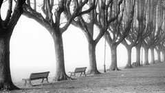 Morning fog 2 (andreasbrink) Tags: angera autumn italy landscape fccautumn