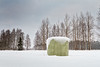 Green Roll Bale Covered With Snow (k009034) Tags: 500px trees sky winter nature north white snow birch green fields countryside agriculture frost pine rural roll scenery farming covered no people bale coldness finland tranquil scene scandinavia copy space oulainen matkaniva teamcanon