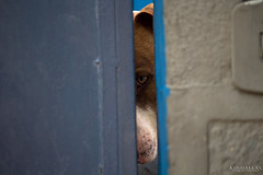 taking a look (Kindallas) Tags: dog cachorro vila madalena são paulo street out door looking eye eyes sad