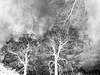 Winter Texturized 1 (Rossdxvx) Tags: winter cold blackandwhite abstract art shadows silhouette textured texture textures texturized 2017 noir nature naturenoir michigan midwest overlay overexposed outdoors outdoor otherworldly bleak dark tree trees experimental experimentation