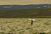Baleine à bosse / Humpback Whales ...Husavik / Iceland (francisaubry) Tags: nikon nikkor 300mm f4 iceland baleine nikonflickraward