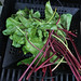 Grilled Beets and Beet Greens
