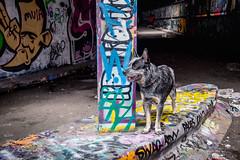 20170712 I'll try my paws at street art (susi luard 2012) Tags: esslinger leake rupert se1 street graffiti london streetart tunnel uk