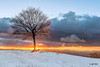 """Canfaito - le luci del tramonto """"accendono"""" l'albero (Luigi Alesi) Tags: canfaito italia italy marche macerata san severino tramonto sunset inverno winter neve snow cielo sky nuvole clouds albero tree luce light sole sun raggi rays paesaggio landscape scenery fujifilm xm1 raw"""