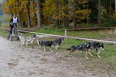 Schlittenhunderennen_225