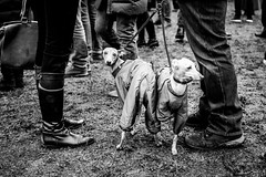 (electrees) Tags: dogs people street nikon city russia meeting demonstration scary black white monochrome