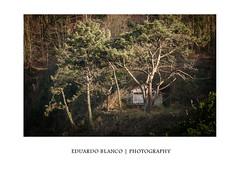 Cadavedo - Asturias (Eduardo Blanco - Photography) Tags: cadavedo asturias spain forest bosque cabaña cabin hut eduardoblanco eduardoblancophotography