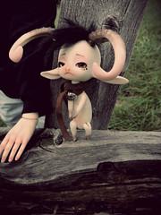 Yeti (FollowingDinosaurs) Tags: bjd goat dollzone heavy rain animal tiny