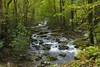 Tributary (Thomas James Caldwell) Tags: porters creek trail great smoky mountain national park water nature green trees landscape tennessee slow rocks gsmnp woods greenbrier white forest stream tree river wood