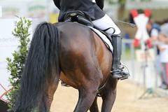 _MG_6212 (dreiwn) Tags: ridingarena reitturnier reiten reitplatz reitverein reitsport ridingclub equestrian showjumping springreiten horse horseback horseriding horseshow pferdesport pferd pony pferde tamronsp70200f28divcusd