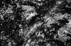 Untitled-2___ (evilpoleandy) Tags: ferrania p30alpha spotmaticf brighton rockpools
