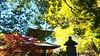 寺院と紅葉 (アルム=バンド) Tags: 銀杏 いちょう イチョウ 寺院 仏閣 寺院仏閣 宝塔 紅葉