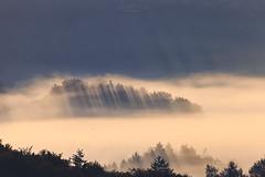 Rays (Rita Eberle-Wessner) Tags: nebel fog wald forest woods landschaft landscape berg mountain hügel hill bäume trees sonnenstrahlen strahlen sunrays rays sunbeams beams sunrise sonnenaufgang morgennebel tal valley odenwald