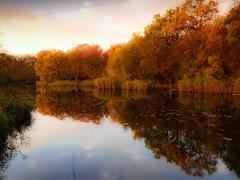 Wake Valley Pond, Epping - dawn 03 (Marek Ziebart) Tags: autumn 100views 10faves trees landscape 20faves 500views paesaggi paysage landleben paisage nature 30faves autumnaltints