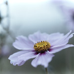 Autumn flower thumbnail