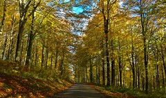 Forest drive (Nige H (Thanks for 11m views)) Tags: nature landscape forest trees forestdrive wiltshire england autumn autumnleaves