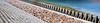 萬宜地質步道   High Island Geo Trail (Alice 2017) Tags: stone 2017 blue autumn seashore water hongkong ilce6000 sony a6000 sonya6000 sonysel1670zcarlzeissvariotessart tessar zeiss carlzeiss unesco geopark aatvl01 aatvl02