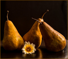 Pears (Wanda Amos@Old Bar) Tags: lighting pears stilllife 3 three flower flora fruit photoborder