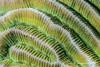 DSC_9764 (theomaynier) Tags: egypte coraux especes invertébré plongée top