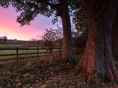 Yetholm Fire.. (vxisme.) Tags: yetholm sunset woodland borders trees olympusem1