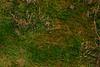DSC_1510 (FMAG) Tags: kpn roztokawiersze moss
