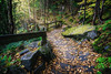 Fjord Hiking in Québec (dennis.brendel) Tags: autumn baum canada herbst indiansummer parcnationaldufjorddusaguenay pflanzen plants québec sony1635f4zaoss sonyalpha7ii tree rivièreéternité kanada