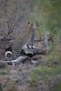 DSC_1681.jpg (Mike/Claire) Tags: leopard 2016 southafrica tandatula timbavati