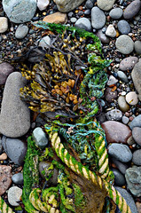 500px Photo ID: 216315621 (www.dooks.org) Tags: nature rock stone texture closeup desktop food noperson outdoors seaweed moss noose hanging fisherman fishing coastal scottish village beach dunure ayr ayrshire paradolia simulacra