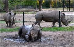 Nyíregyházi Állatpark (csiszerd_50) Tags: