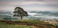 The Roaches Tree