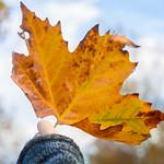 Fall Favorites thumbnail