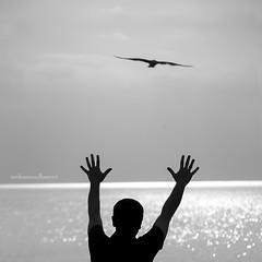Margin with horizon.. waiting for you.. (mhd.hamwi) Tags: silhouette horizon lake reflection bird seagull waves light bw monochrome sky clouds illinois chicago water human hands nikon nikond5000 nostalgia lakemichigan michigan valparaiso indiana dunes indianadunes mhdhamwi mohammadhamwi