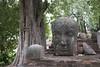 Buddha's head (ramosblancor) Tags: humanos humans historia history escultura sculpture religión religion templo temple wat cabeza head buda buddha árbol tree tronco trunk watratchaburana ayutthaya tailandia thailand viajar travel
