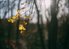 Last few hanging (V Photography and Art) Tags: backlit leaves forest woods bokeh flare lensflare