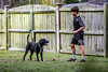 Luke & Lego - Lexington S.C. (DT's Photo Site - Anderson S.C.) Tags: canon 6d 135mml lens lexingtonsc midlands south carolina boy dog playing fetch ball yard fence pet lab black puppy lego america usa family teen kids youth games